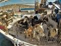 Gay Nude Sail Cruise Greece